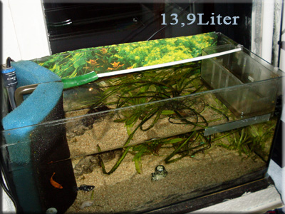 aquarium_wasser_weg_corvintaurus