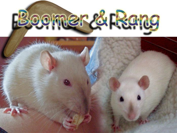 ratten_boomerang